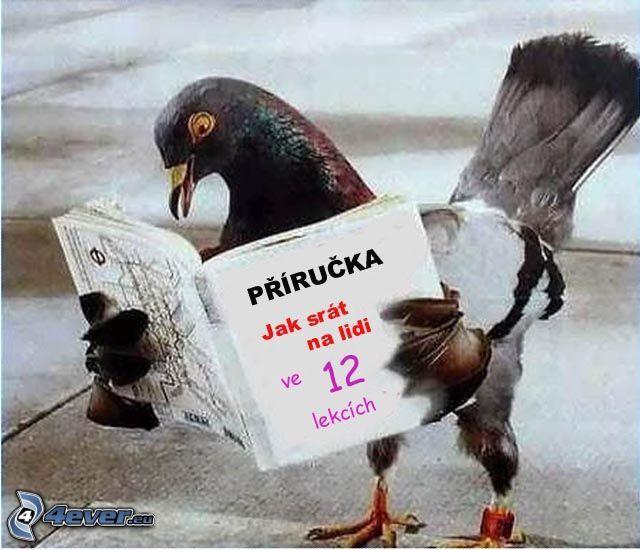 holub, kniha