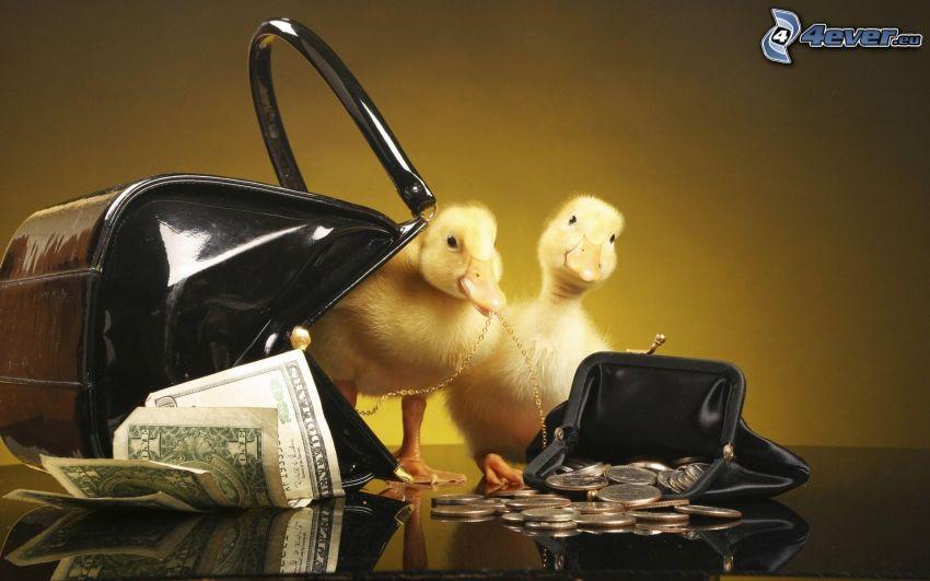 káčatká, peniaze, kabelka, peňaženka