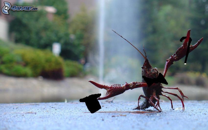 krab, spevák