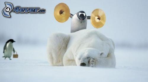 ľadový medveď, tučniak, spánok, odvaha, činely