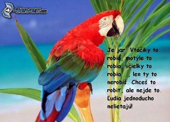 lietanie, vtip, papagáj, jar