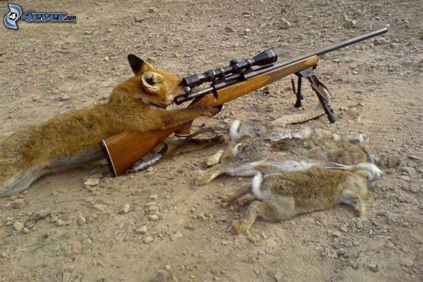 líška, puška, zajace, lov