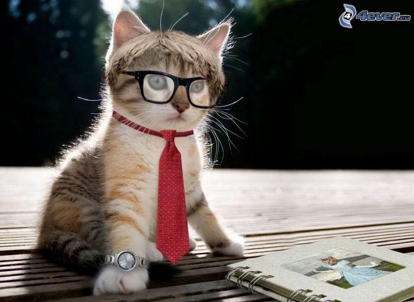 mačka, okuliare, kravata, hodinky