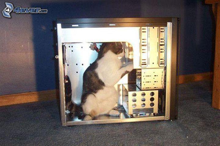 mačka, počítač, oprava