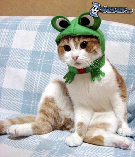 mačka, žaba, kostým