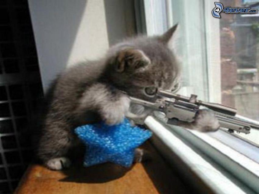 malé mačiatko, sniper, zabiják