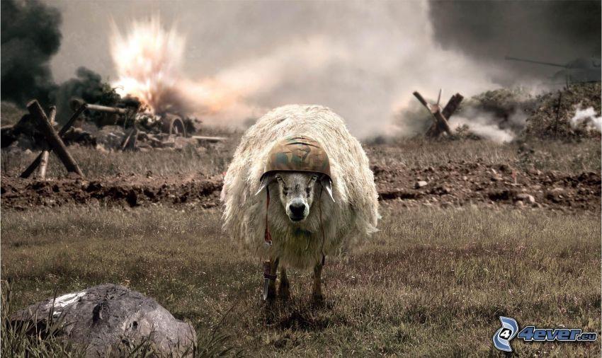 ovečka, prilba, výbuch