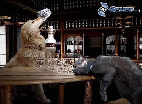 pes a mačka, alkohol, pohárik