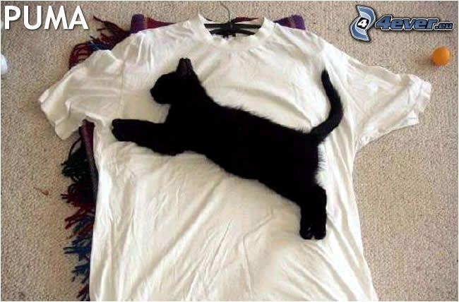 puma, mačka, tričko
