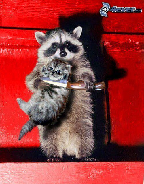 rukojemník, mýval, sivé mačiatko