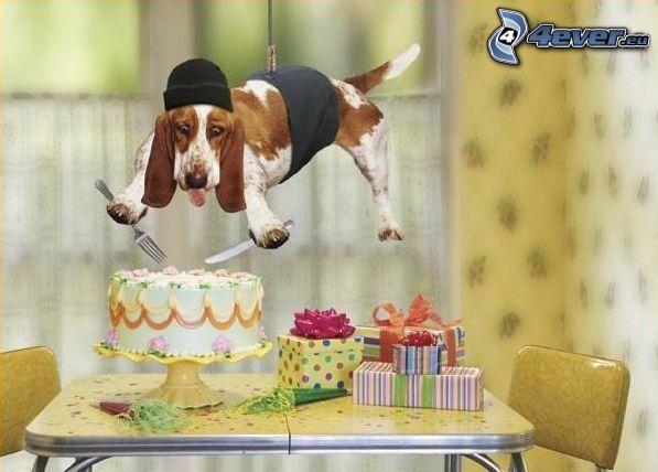 špión, basset, torta, darčeky