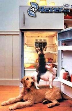 spolupráca, pes a mačka, chladnička