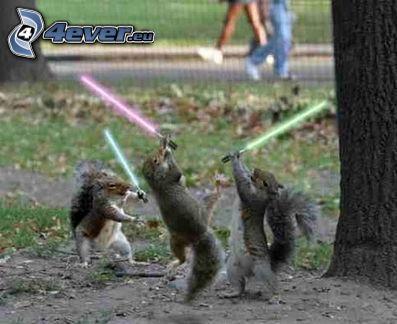 Star Wars, veveričky