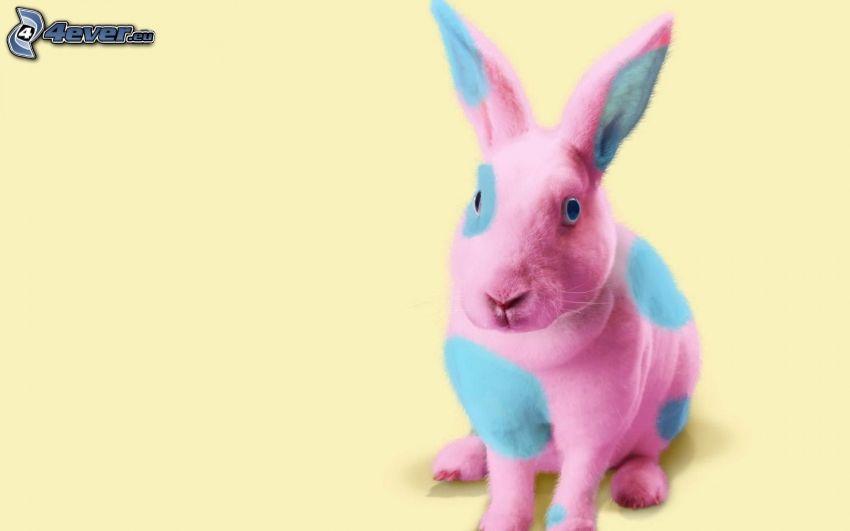 zajac, farby