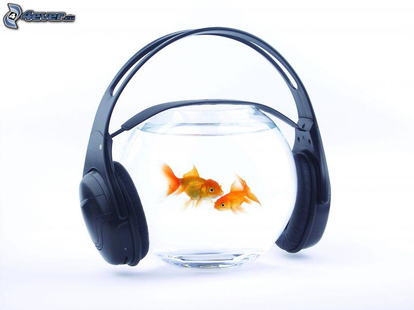 zlatá rybka, akvárium, slúchadlá