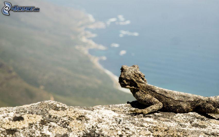 Agama, výhľad na more, pobrežie, útes
