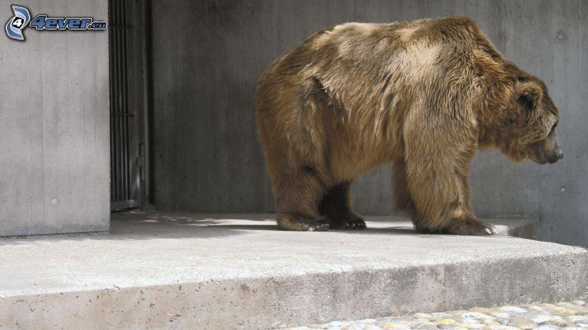 hnedý medveď, ZOO