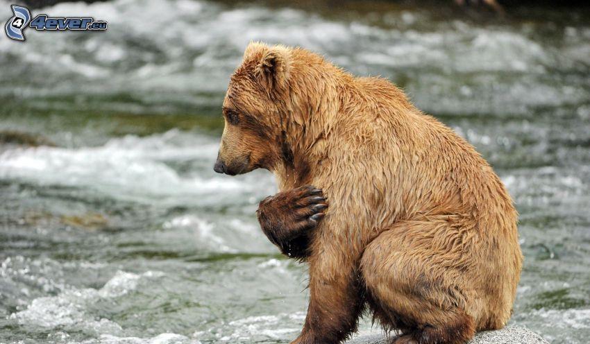 hnedý medveď