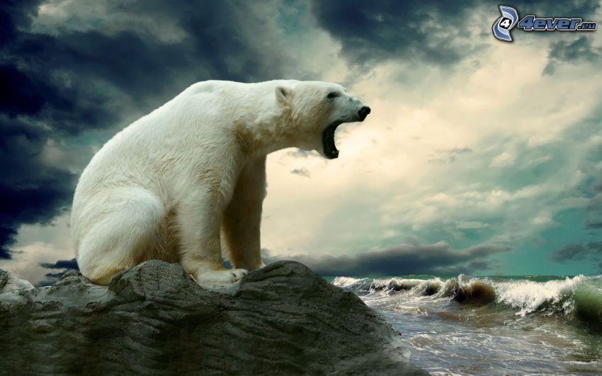 ľadový medveď, kameň, voda, mraky