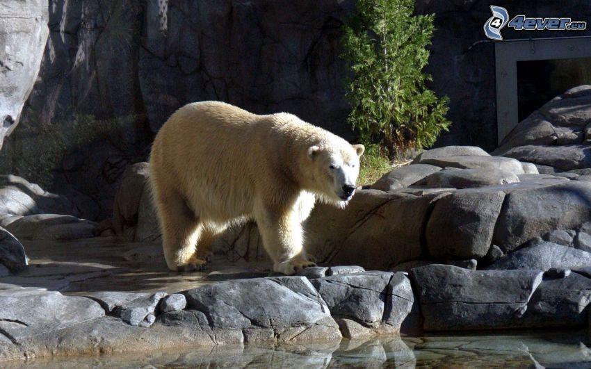 ľadový medveď, ZOO