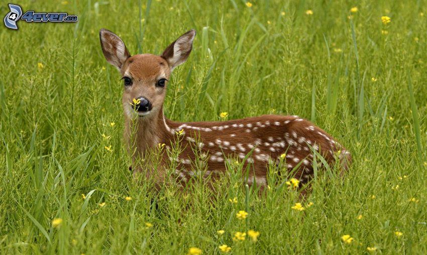 mláďatko jeleňa, vysoká tráva, poľné kvety
