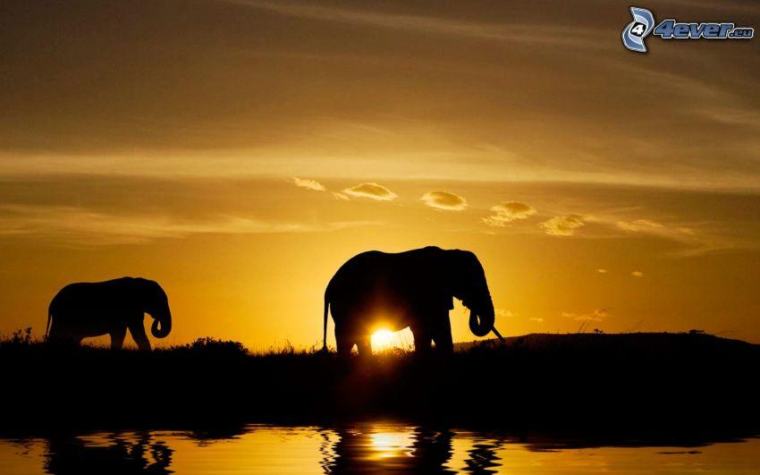 siluety slonov, západ slnka, vodná hladina