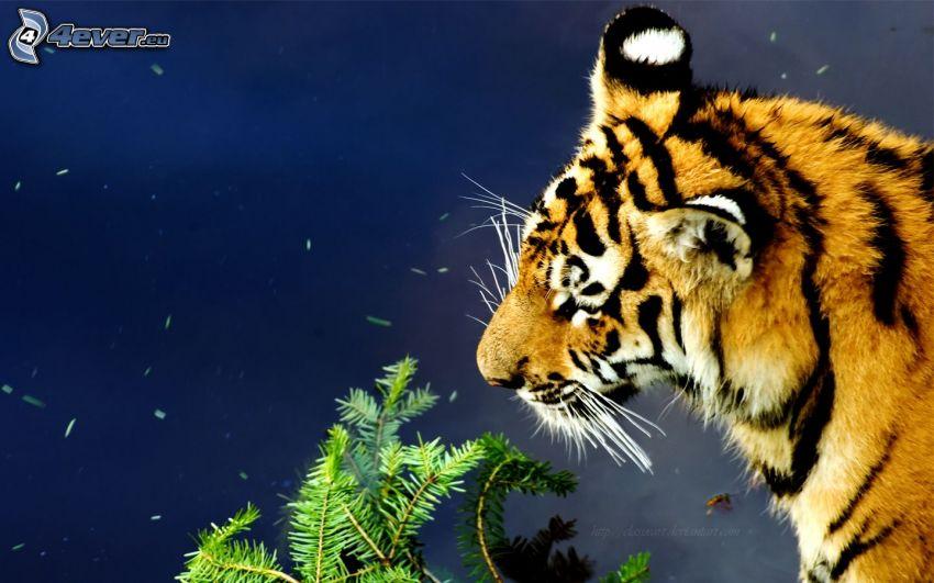 tiger, ihličie