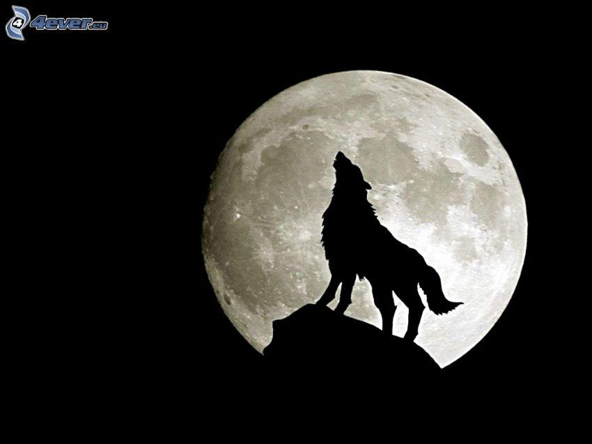 vlk zavýja, Mesiac, spln, silueta vlka