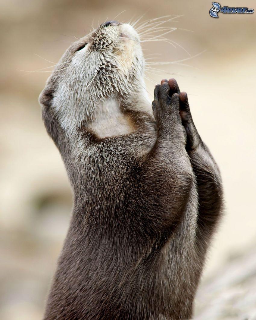vydra, modlitba