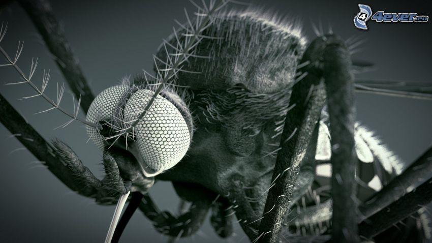 komár, makro, čiernobiela fotka