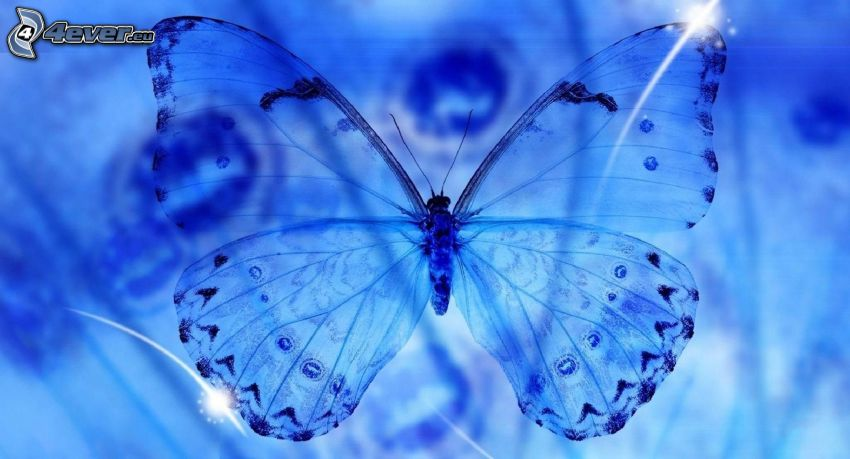 modrý motýľ
