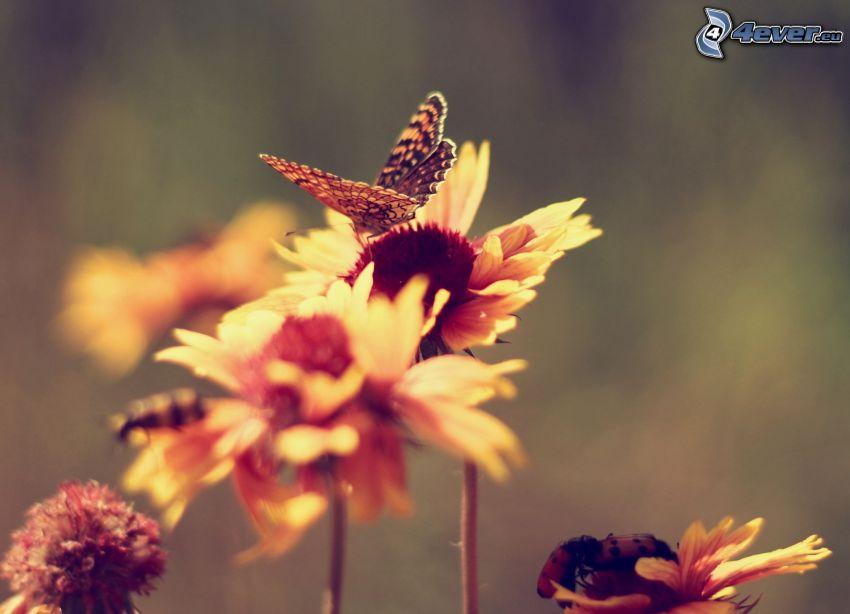 motýľ na kvete, chrobáky