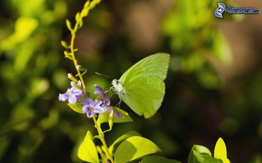 motýľ na kvete, fialový kvet