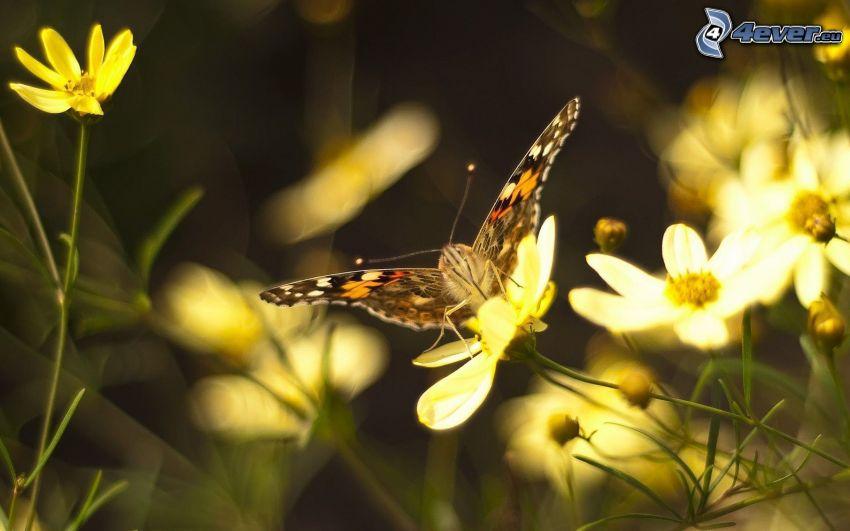 motýľ na kvete, žlté kvety