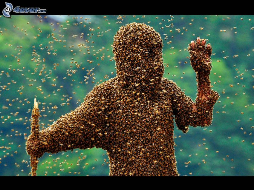včely, postava