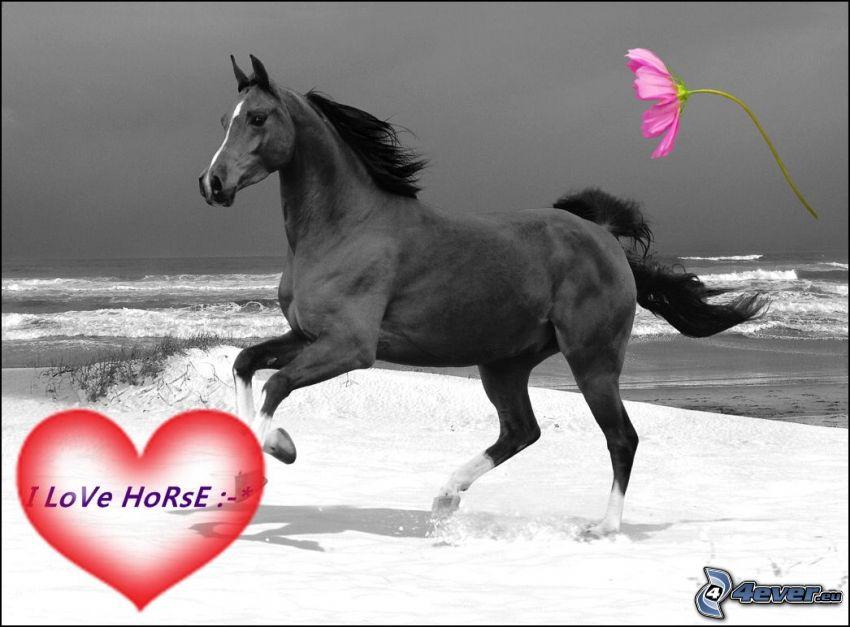 kôň na pláži, more, kvet