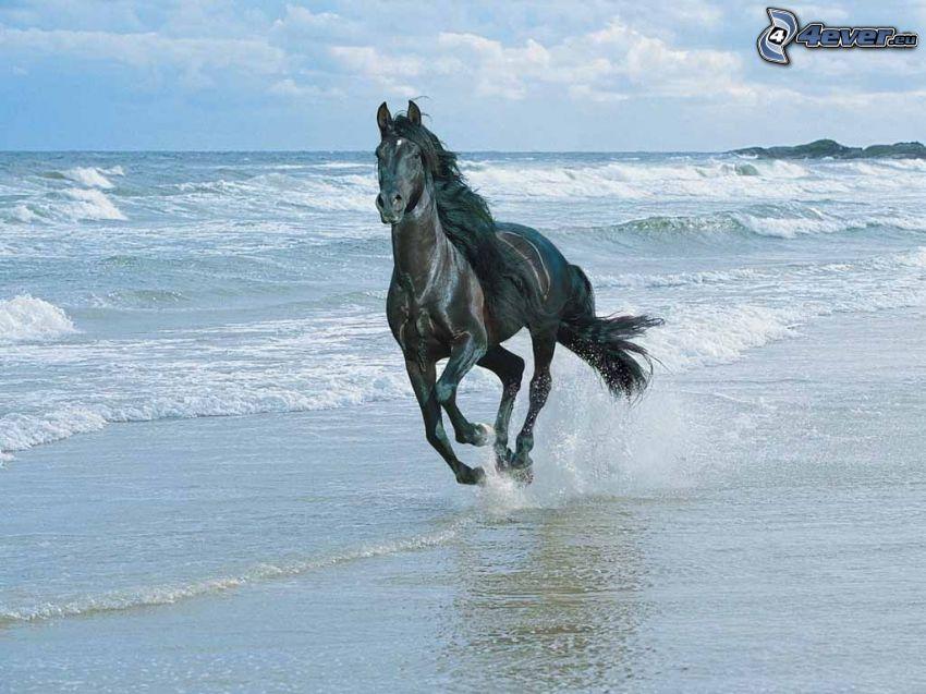 kôň na pláži, more, sloboda, skaly