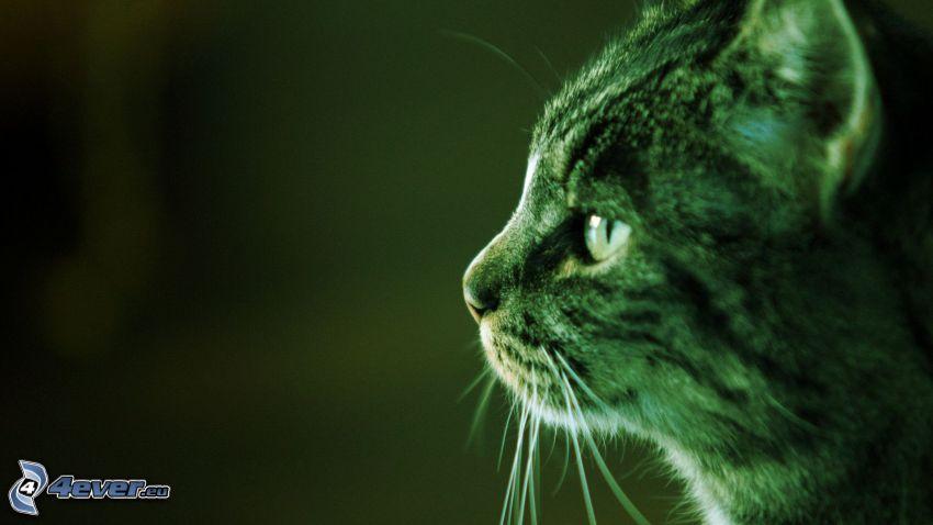 hlava mačky