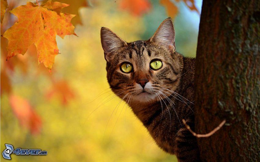 hnedá mačka, jesenné listy