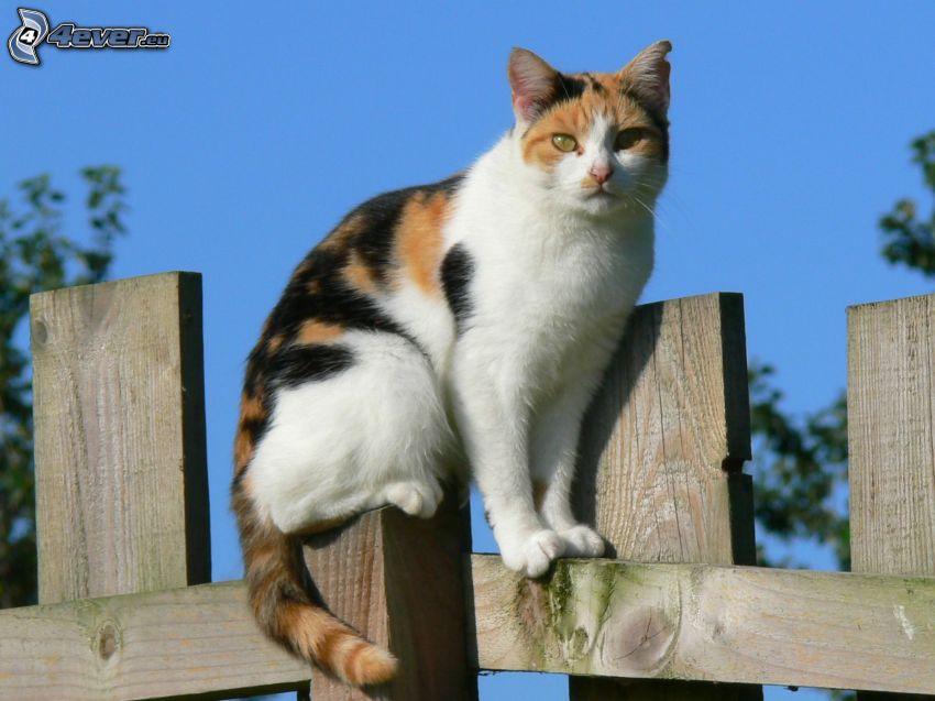 kocúr na plote, ryšavá mačka, drevený plot