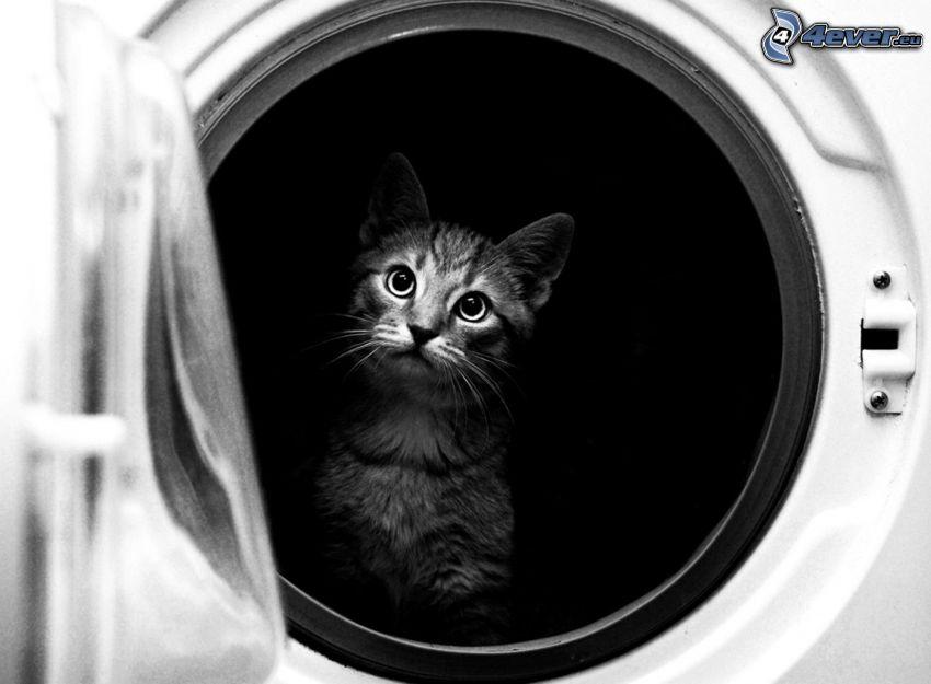 mačiatko, práčka