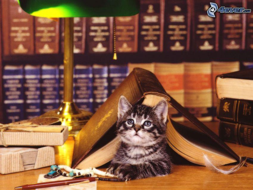 mačka, knižnica, lampa
