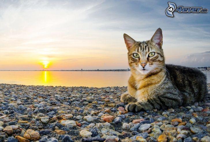 mačka, večerná pláž, kamienky, západ slnka