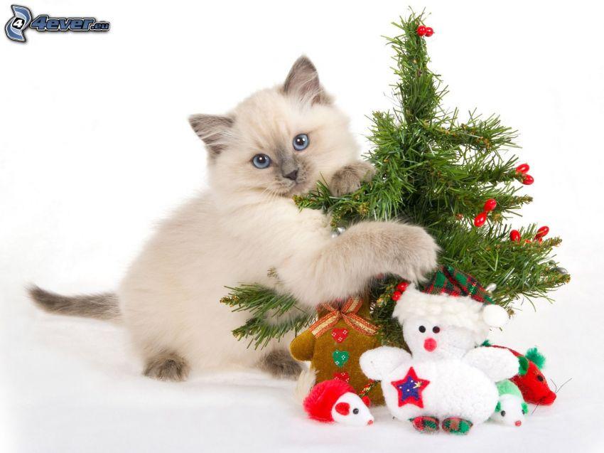 mačka, vianočný stromček, plyšové hračky