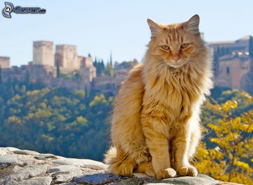 mačka, výhľad