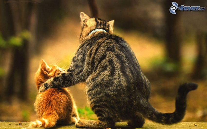 mačky, malé ryšavé mačiatko, objatie