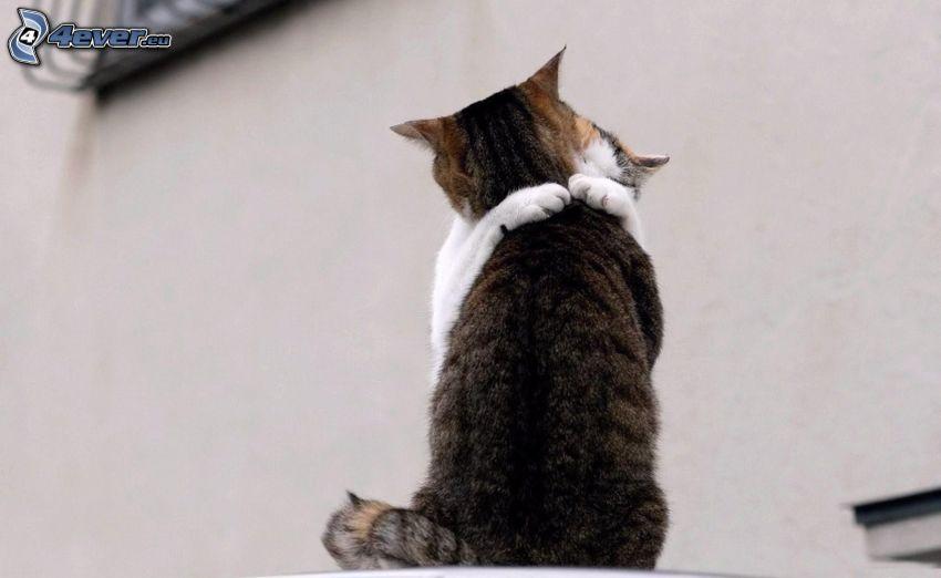 mačky, objatie