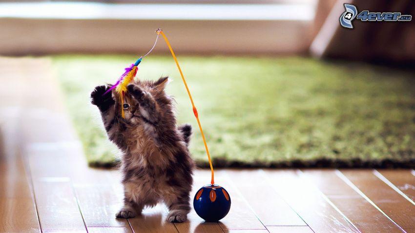 malé mačiatko, hračka