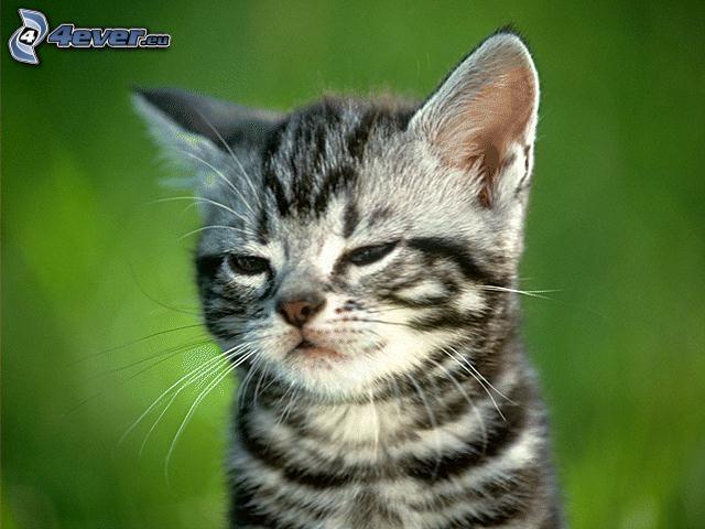 malé mačiatko