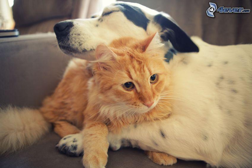 pes a mačka, láska